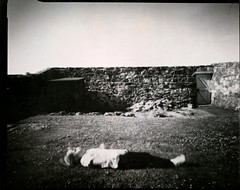 Titan 2018 07 14 (Sibokk) Tags: 4x5 5x4 anna directpositive film harman ilford largeformat mono photography pinhole scotland titan uk fife anstruther anstruther2018