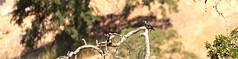 IMG_0398 - edit 1 (Anthony Lockstone) Tags: don pedro lake california