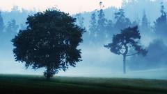 Ordoeste (Feans) Tags: sony a7r a7rii ii negreira neboa fog mist mencer sunrise galiza galicia carballo oak fe 100400 gm
