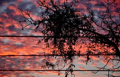 beleza entre fios (Ruby Ferreira ®) Tags: branches sunset silhuetas silhouettes clouds nuvens fios wires árvore tree athome