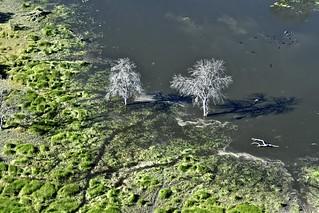 Botswana 2018 - Delta de l'Okavango