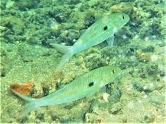 Snorkeling in shallow water (thomasgorman1) Tags: fish underwater hawaii molokai fujifilm snorkeling
