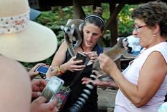 Pairi Daiza 3_2018_07_14_(69) (Juergen__S) Tags: belgium belgien belgique brugelette pairidaiza park panda pelican animals jousting feeding lemur african dance dancers tiger portrait