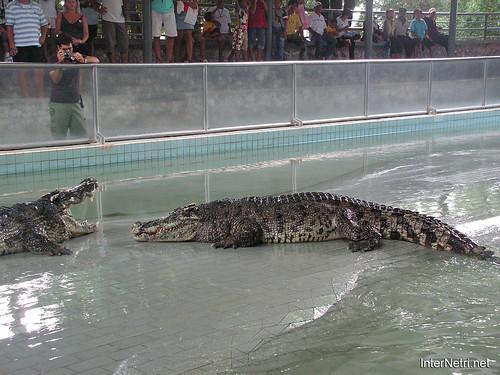 В пащу крокодилу Паттайя Таїланд Thailand InterNetri 33