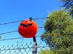 2018_0623_001 (seannarae) Tags: 2010s 2018 ca capture date location month states tg5 year dayofweek fence jackolantern june objects pumpkin road roads saturday westsideroad
