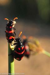 DSC_8689-2 (paul mariano) Tags: paulmarianocom paul mariano allrightsreserved namibia wildlife photography animals africa