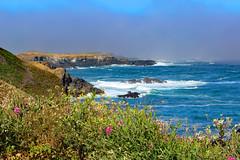 Northern California Coast/Mendocino, July 2018 (Northwest Lovers) Tags: california highway1 northcoast