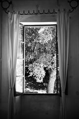 L1029969 (Daniele Pisani) Tags: palaia finestra tempio dena temple toscana albero