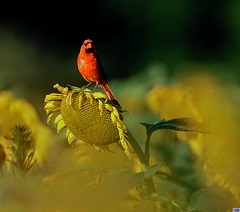 Red+Yellow=Green (Alpha-Male1) Tags: sonya6300 canon 500mm f4l is usm sigmamc11 kenko 14x teleplus pro