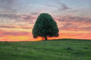 Baum bei Irschenberg