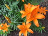 IMG_1159 (cathead77) Tags: mercercounty westvirginia wv princeton chilis