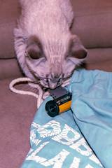 This film smells good! (anechoic_photos) Tags: filme smell film vista400 cat color canoneos1n