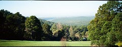Dandenong Ranges National Park (Matthew Paul Argall) Tags: anscopixpanorama fixedfocus focusfree 35mmfilm panorama panoramic haking halina plasticlens cheaplens ultramax 400speedfilm 400isofilm kodakultramax400 kodak400 yarraranges landscape