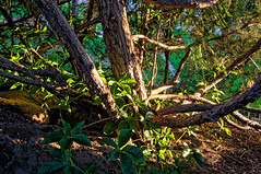 Spreading (Narodnie Mstiteli) Tags: idlewildpark reno nevada donbachman narodniemstiteli marshalartsofchilcoot naturepark park arboretum citypark bark treebark