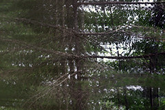 reflection of a reflection (scienceduck) Tags: 2018 scienceduck june ontario canada muskoka muldrew lakemuldrew tree reflection forest pine