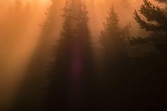 SAM_2937-2 (Apostol Dragiev) Tags: родопи rodopimountain rodopi mountain forest fog sunrise