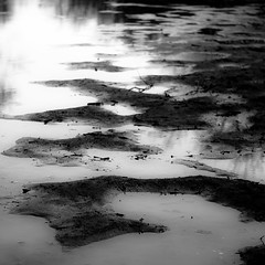 Flooded Banks 019 (noahbw) Tags: captaindanielwrightwoods d5000 desplainesriver dof nikon abstract blackwhite blackandwhite blur bw depthoffield forest landscape light monochrome mud natural noahbw quiet reflection river spring square still stillness water woods