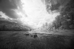 Infrared on the River (DRCPhoto) Tags: irconverteddslr canon5d infrared digitalinfrared digitalir sigma1224mmdghsm cheatriver westvirginia