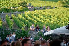 Wein am Stein (mattrkeyworth) Tags: hoffestamstein weingutamstein weinamstein würzburg egofm sel85f14gm