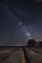 Lavanda de Brihuega. (jetepe72) Tags: via lactea vl brihuega nocturna lavanda campo estrellas