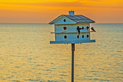 Golden Hour on Lake Erie (jmhutnik) Tags: lake lakeerie willowick ohio goldenhour birdhouse birds summer july