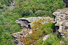 571 - Cap Corse - Nonza, sur la falaise (paspog) Tags: nonza corse corsica capcorse mai may 2018 falaise cliff france