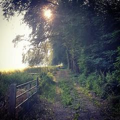 Diepenveen Forest (Stonebridge65) Tags: diepenveen olst salland overijssel nederland netherlands landschap landscape sunrise zonsopgang path bospad pad bomen trees samsungs7 samsung mobilephone smartphone