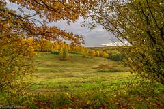 October in Tsaritsyno Park / Октябрь в Царицыно (Vladimir Zhdanov) Tags: autumn october nature landscape sky cloud russia moscow tsaritsyno park forest tree leaf grass field