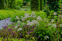 From the Sofiero castle garden (frankmh) Tags: plant flower garden sofierocastlegarden helsingborg skåne sweden