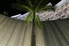 IMG_4897 (Man O' World) Tags: baha mar nassau bahamas beach turtle resort