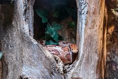 Franck-Barske-6240.jpg (franck_barske) Tags: vacances france loireatlantique paysdelaloire aude serpent muséum séjour nantes languedocroussillon voyages concepts animal