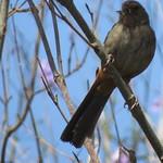 bird 7 13 18 thumbnail