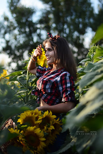 Beautiful girl on a sunflower field