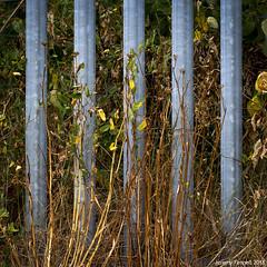 On Narroways Hill (zolaczakl) Tags: bristol stwerburghs narrowayshill 2018 july photographybyjeremyfennell nikond7200 urbannature england uk nikonafsnikkor50mmf18glens