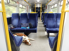 Class 319  Bailey (deltrems) Tags: arriva northern class 319 train rail railway emu electric multiple unit wigan north western greater manchester dog welsh border collie bailey