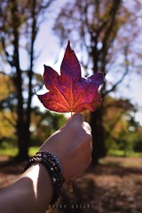 Autumn Leaf (Elton Pelser) Tags: autumn leaf nature outdoor nikon d3400 trees color 35mm bokeh tree photography kitlens