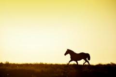 Campeando a tropa (Eduardo Amorim) Tags: cavalos caballos horses chevaux cavalli pferde caballo horse cheval cavallo pferd crioulo criollo crioulos criollos cavalocrioulo cavaloscrioulos caballocriollo caballoscriollos pampa campanha pelotas costadoce riograndedosul brésil brasil sudamérica südamerika suramérica américadosul southamerica amériquedusud americameridionale américadelsur americadelsud cavalo 馬 حصان 马 лошадь ঘোড়া 말 סוס ม้า häst hest hevonen άλογο brazil eduardoamorim