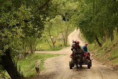 Rural Transylvania (Derbyshire Harrier) Tags: 2018 rural horse dog people cart naturetrek june lane track transylvania romania trees green magura