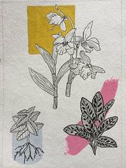 Sunlight square (amydrawsfood) Tags: floral floralillustration illustration spring summer watercolor inkdrawing