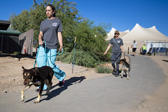 180623_PACC Phase two Dog Move_008 (PimaCounty) Tags: bond bonds sundt pacc move