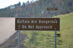 Buffalo Are Dangerous (mama-bear) Tags: may 2018 southdakota blackhills familyvacation custerstatepark chasingspring