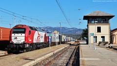 Tarda de mercaderies (tunel_argentera) Tags: tren train ferrocarril railway zug adif logitren móra móralanova teco 335