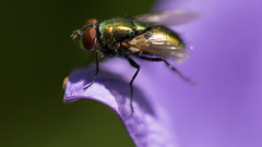 Purple Diving Board (Ken Krach Photography) Tags: fly