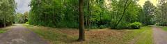 Drzewo 19. południka / Meridian 19E tree (Tomasz Lewicki) Tags: panorama obserwacje observations chorzów tree drzewa przyroda nature natura