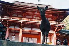 000031 (stonkolegg) Tags: japan nippon nara nikon fm nikkor 50mm 14 film photography fuji fujifilm superia iso 400 27 exp
