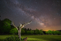 Celestial tree (LEXPIX_) Tags: night sky milky way galaxy galactic center stars starry starscape starrynight dustlanes light painted painting nightscape lightpainting lone tree green celestial scene image picture long exposure nikon d850 nikkor 1424 14mm lexpix