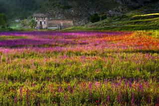 Primavera  en campos de Teruel