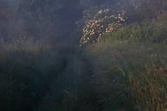 on the river of my childhood VII (Mindaugas Buivydas) Tags: lietuva lithuania color summer june morning morninglight fog mist delta nemunasdelta nemunasdeltaregionalpark nemunodeltosregioninisparkas aukštumala road path mindaugasbuivydas favoriteplaces ontheriverofmychildhood memelland