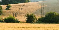 018Jun 21: Grainfield Textures (Johan Pipet 2M+ views) Tags: flickr pole obilie lány grain field grainfield summer leto sunny landscape hill village countryside dedina vidiek krajina horná ves slovakia slovensko eu europe palo bartos bartoš canon