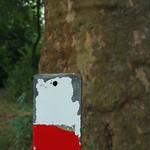 Hamster Rorschach thumbnail